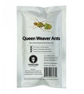Hormigas tejedoras reina