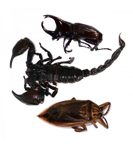 Escorpión, Escarabajo y Chinche