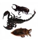 Escorpión, Escarabajo y Cucaracha gigante de agua