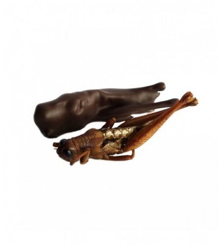 Escorpiones con chocolate