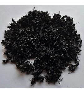 Hormigas negras 10 gr