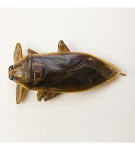 Cucaracha gigante de agua