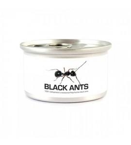 Hormigas negras 5 gr