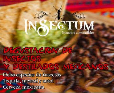 Degustación de insectos y destilados mexicanos patrocinado por Insectum